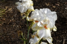 Descanso Gardens in Early January, part 2 (7)
