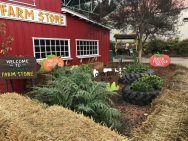 Rainy Day at Cal Poly's Taste of the Farm Store (15)