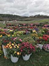 Rainy Day at Cal Poly's Taste of the Farm Store (7)