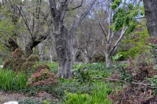 Easter Afternoon at the Arboretum (10)