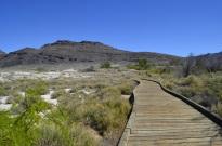 Ash Meadows (2)