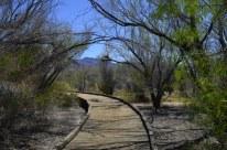 Ash Meadows (8)
