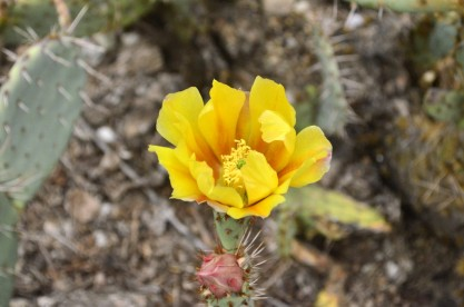 Yellow Yellow Yellow (1)