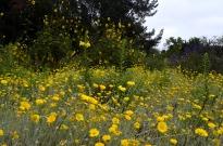 Yellow Yellow Yellow (2)