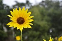 Yellow Yellow Yellow (3)