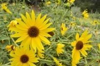 Yellow Yellow Yellow (4)