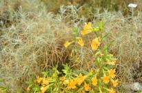 Yellow Yellow Yellow (9)