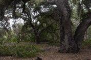Rancho Santa Ana Botanic Gardens (10)