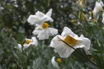 Rancho Santa Ana Botanic Gardens (2)
