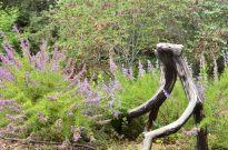 Rancho Santa Ana Botanic Gardens (3)