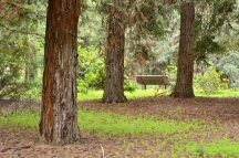 Rancho Santa Ana Botanic Gardens (4)