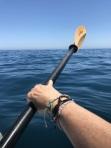 Kayaking off Catalina Island (9)