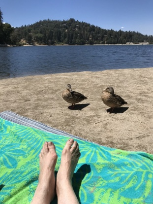 Ducks trying to move in on our spot