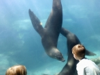 Kids and seals at Long Beach acquarium