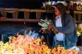 Worker at flower fields, Carlsbad