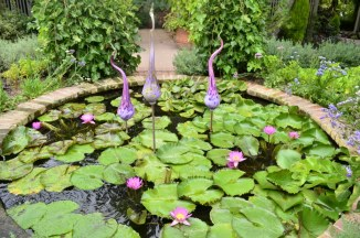 Lily Pond at Sherman Gardens (4)