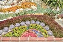 Succulent Arrangements at Sherman Gardens (2)
