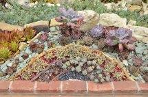 Succulent Arrangements at Sherman Gardens (3)