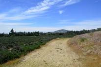 Lavender Ranch in Cherry Valley