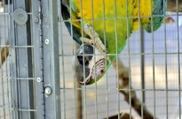 Visiting Wildlife Waystation on Bird LA Day (14)