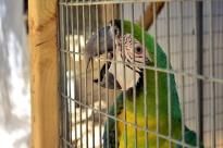 Visiting Wildlife Waystation on Bird LA Day (15)