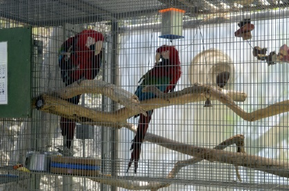 Visiting Wildlife Waystation on Bird LA Day (16)