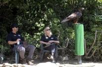 Hatari the eagle