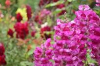 Descanso Gardens in June (2)