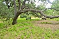 Descanso Gardens in June (5)