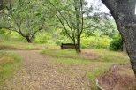 Descanso Gardens in June (7)