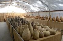 Visiting Welburn Gourd Farm (14)