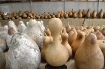 Visiting Welburn Gourd Farm (15)