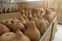 Visiting Welburn Gourd Farm (16)