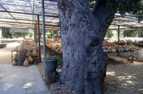 Visiting Welburn Gourd Farm (27)
