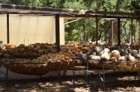 Visiting Welburn Gourd Farm (7)