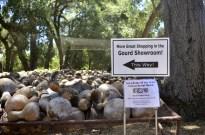 Visiting Welburn Gourd Farm (8)