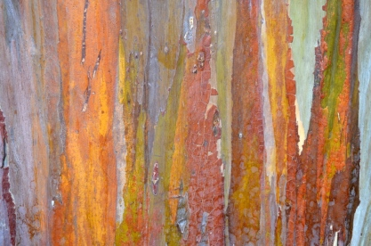 Beautiful tree bark