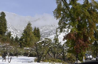 It Snowed! (1)