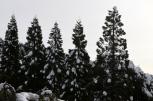 It Snowed! (10)