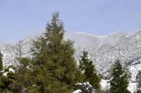 It Snowed! (3)