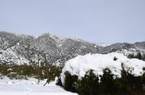 It Snowed! (8)
