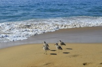 Birds On The Beach (2)