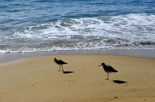 Birds On The Beach (4)