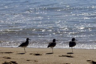 Birds On The Beach (5)