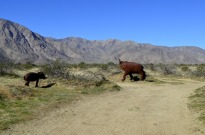 Borrego Springs Sculptures (17)