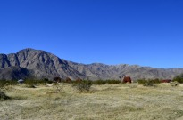 Borrego Springs Sculptures (21)