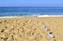 Beach Time (2)
