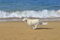 Beach Time (6)