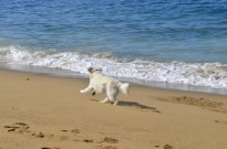 Beach Time (7)