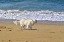 Beach Time (8)